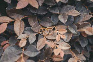daniela-mengarelli-tendenze-matrimonio-autunno-2021_mmoodboard